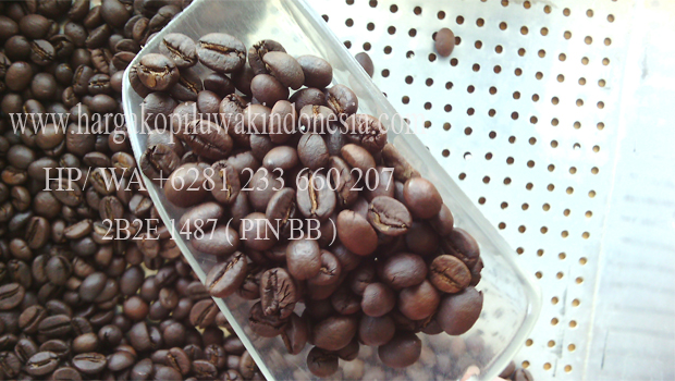 Jual Kopi Luwak Roasted, Luwak Coffee Roasted, Kopi Luwak Coffee Sangray